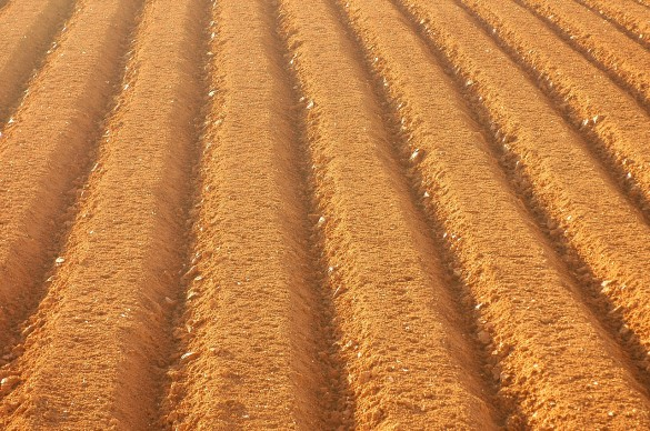 farming-441463_1280